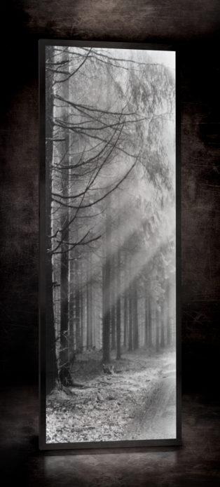 Forêt RÉF. D – 020