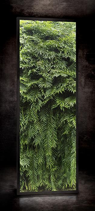 Jungle RÉF. D – 018